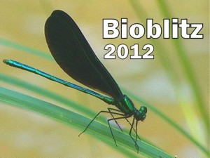 Title picture - Ebony jewelwing damselfly courtesy Stephen R. Milrick, Florida Dept. of Environmental Protection