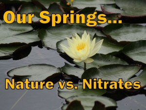 "Our Springs title (photo ""Waterlilly 3"" courtesy Flavio Takemoto)"